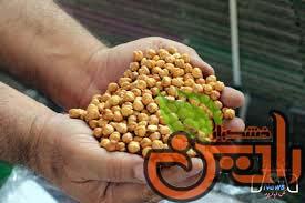 خط تولید نخودچی صادراتی